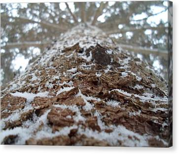 Snowy Tree Canvas Print by Jenna Mengersen