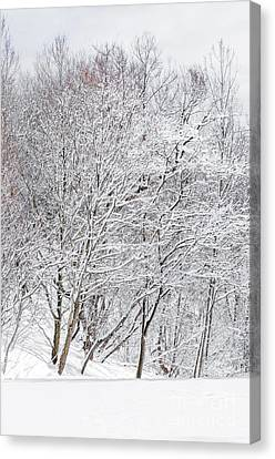 Snowy Trees In Winter Park Canvas Print by Elena Elisseeva