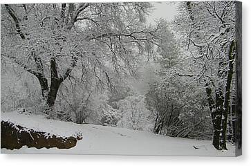 Snowy Trees Canvas Print by Tom Mansfield