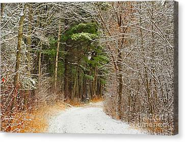 Canvas Print featuring the photograph Snowy Tunnel Of Trees by Terri Gostola