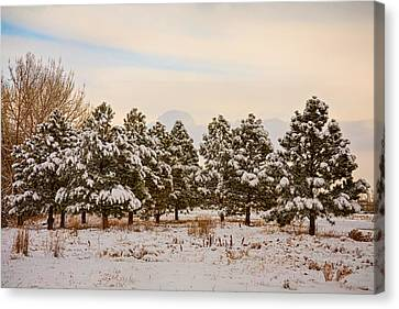 Snowy Winter Pine Trees Canvas Print by James BO  Insogna