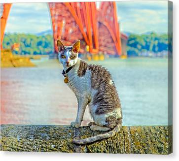 Snuggles The Cat Canvas Print by Tylie Duff