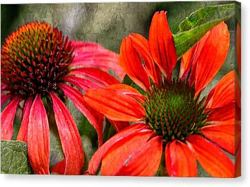 So Happy Together....... Canvas Print