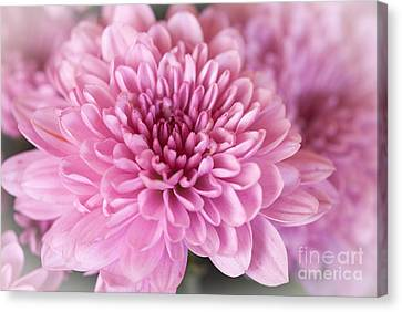 So Pink Canvas Print