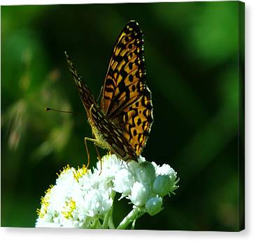 Soaking In The Sun Canvas Print by Jeff Swan