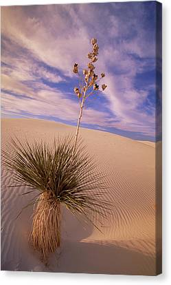 New Individuals Canvas Print - Soaptree Yucca  On Dune White Sands by