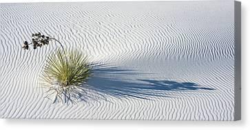 Soaptree Yucca Yucca Elata Canvas Print