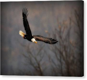 Soar Like An Eagle Canvas Print by Angel Cher