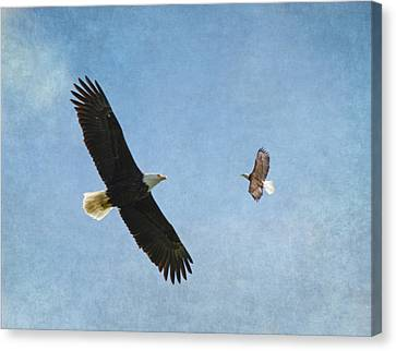 Eagle In Flight Canvas Print - Soar On The Wings Of Eagles by Angie Vogel