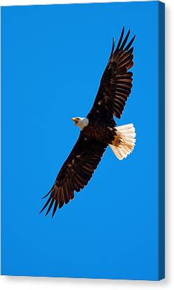 Canvas Print featuring the photograph Soaring by Aaron Whittemore