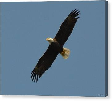 Soaring Bald Eagle Canvas Print by Jeff at JSJ Photography