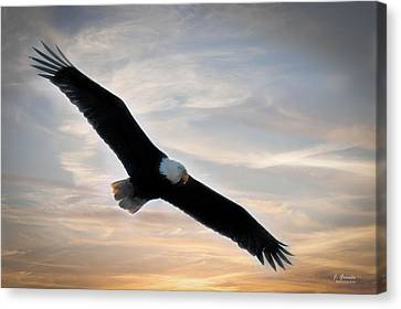 South Carolina State Bird Canvas Print - Soaring Eagle At Sunset by Joe Granita