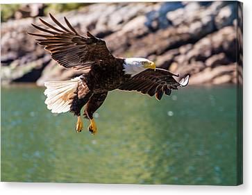 Soaring Eagle Canvas Print by Ian Stotesbury