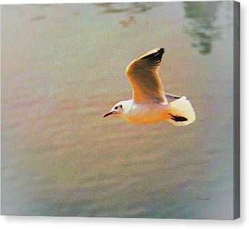Soaring Gull Canvas Print by Dennis Lundell