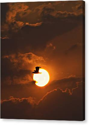 Soaring In The Sun Canvas Print by Tony Reddington