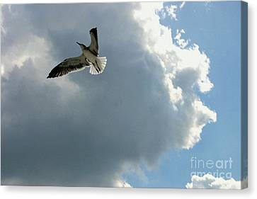 Canvas Print featuring the photograph Soaring by Jeanne Forsythe