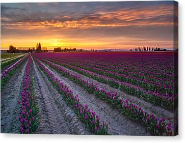 Soaring Magenta Fields Canvas Print