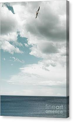 Flying Seagull Canvas Print - Soaring by Margie Hurwich