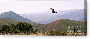 Soaring Over California - Condor In Morro Bay Coastal Hills Canvas Print by Artist and Photographer Laura Wrede