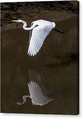 Canvas Print featuring the photograph Soaring Reflection by Paula Porterfield-Izzo