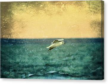 Flying Seagull Canvas Print - Soaring Seagull by Heidi Piccerelli