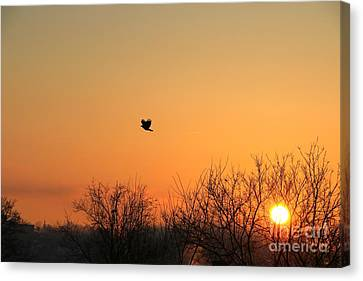 Soaring Sunrise 1 Canvas Print by Jay Nodianos