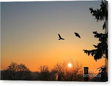 Soaring Sunrise 3 Canvas Print by Jay Nodianos