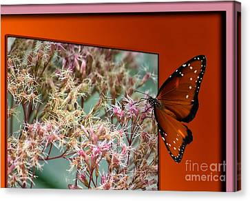 Social Butterfly 03 Canvas Print by Thomas Woolworth