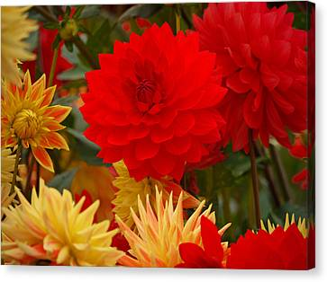 Canvas Print featuring the photograph Sockeye And Upmost Dahlias by Jordan Blackstone
