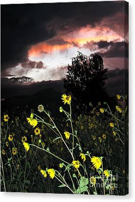 Socorro Sunset Canvas Print by Steven Ralser