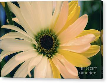 Canvas Print featuring the photograph Soft by Adrian LaRoque
