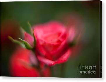 Soft And Peaceful Canvas Print by Mike Reid