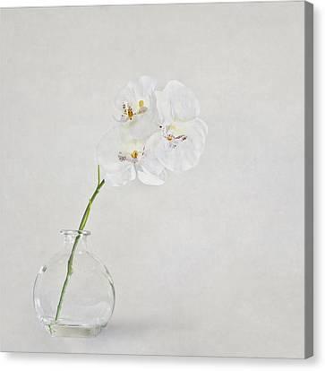 Soft As A Whisper Canvas Print by Evelina Kremsdorf