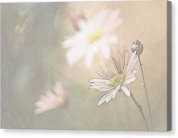Soft Aster Canvas Print by Tammy Schneider