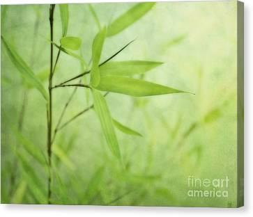 Soft Bamboo Canvas Print by Priska Wettstein