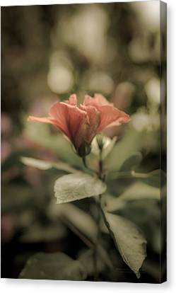 Soft Beauty Canvas Print