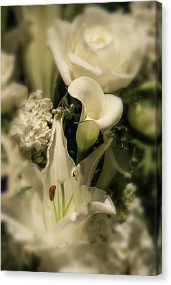 Soft Calla Lily Canvas Print by Garry Gay