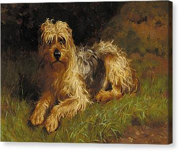 Soft Coated Wheaten Terrier  Canvas Print by Alfred Duke