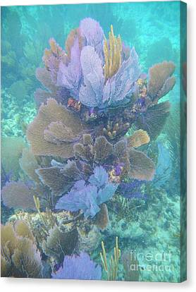 Pennekamp Canvas Print - Soft Coral by Adam Jewell
