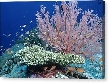 Soft Coral And Reef Fish Canvas Print by Andrew J. Martinez