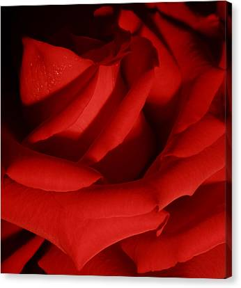 Soft Elegance Canvas Print