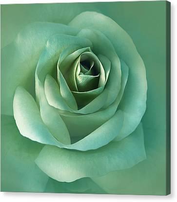 Soft Emerald Green Rose Flower Canvas Print by Jennie Marie Schell