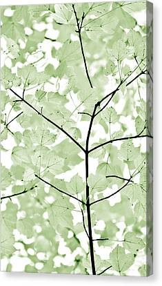 Soft Forest Green Leaves Melody Canvas Print by Jennie Marie Schell