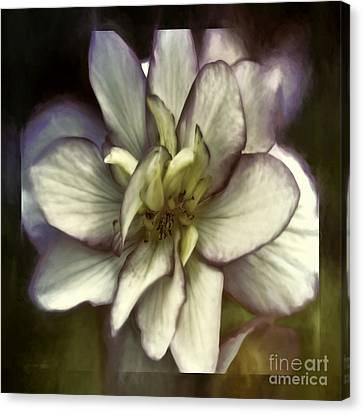 Soft Harmony Canvas Print