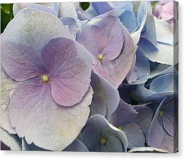 Canvas Print featuring the photograph Soft Hydrangea  by Caryl J Bohn