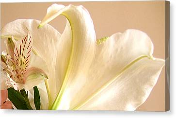 Canvas Print featuring the photograph Soft Lily Photograph by Mary Bedy