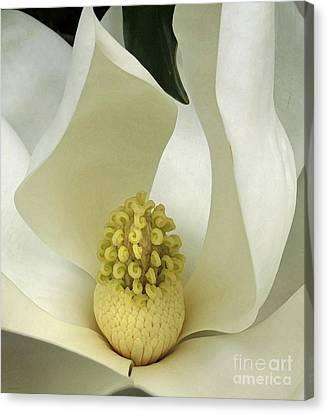 Soft Magnolia Grandiflora Canvas Print