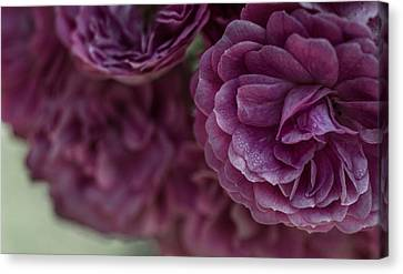 Canvas Print featuring the photograph Soft Melody by Julie Andel