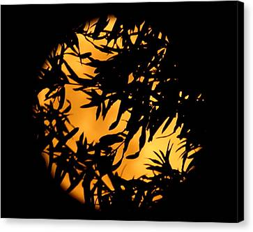 Soft Moon Silhouette Canvas Print by Chris Fraser