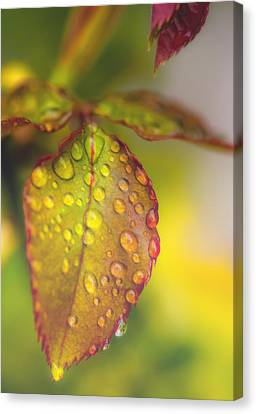 Wet Leaves Canvas Print - Soft Morning Rain by Stephen Anderson
